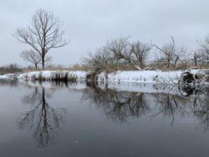 木が川の方に傾いているのは鹿が木を食べてしまうからだそう