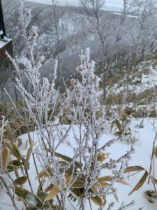 今回観察出来たのは樹霜