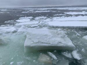 流氷が茶色に見えるのはプランクトン