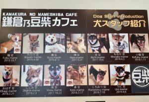 豆柴ちゃん達は犬スタッフとして紹介されています。