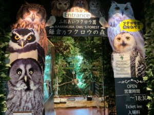 豆柴カフェと同じ会社が運営している鎌倉乃フクロウの森。