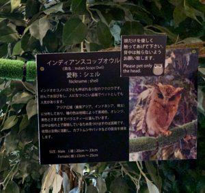 1匹1匹のフクロウの種類や特徴、ニックネームが紹介されていて楽しいです。